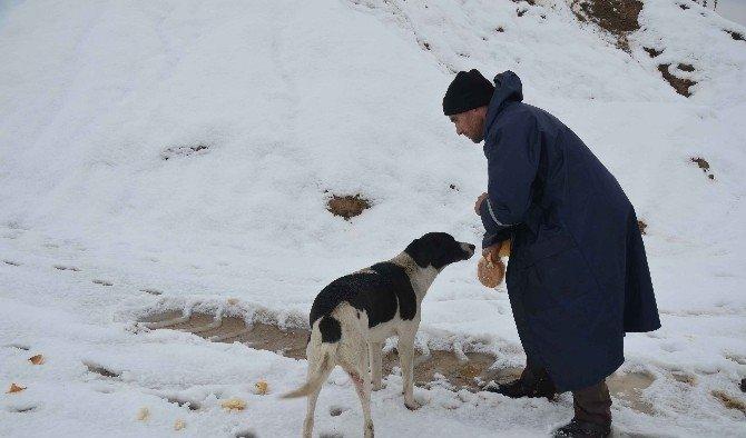 Turgutlu Belediyesi can dostlarını unutmadı