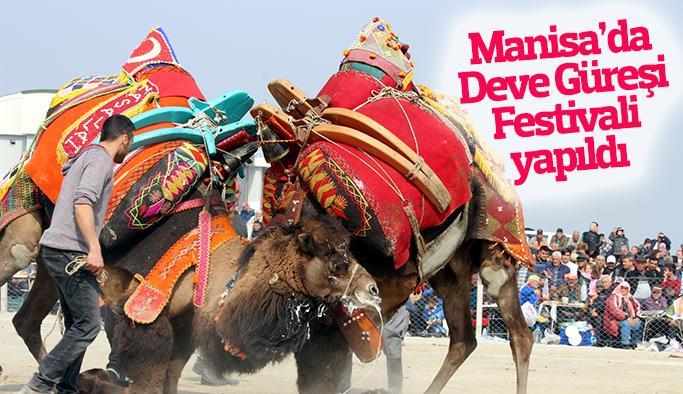 Manisa'da Deve Güreşi Festivali yapıldı