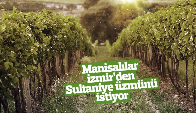 Manisalılar, İzmir'den 'Sultaniye üzümünü' istiyor