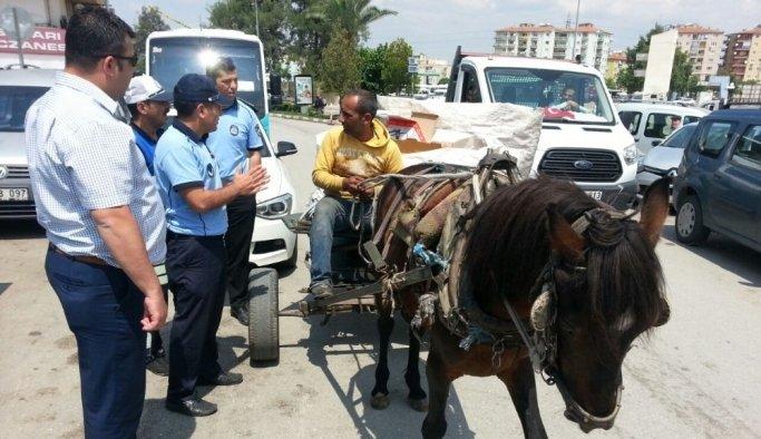 Trafiği tehlikeye atan at arabalarına zabıta 'dur' dedi