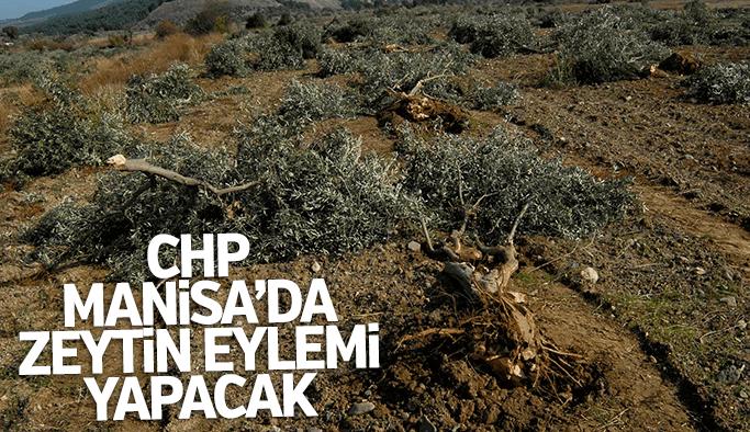 CHP'liler Akhisar'da zeytin üreticileri ile eyleme hazırlanıyor