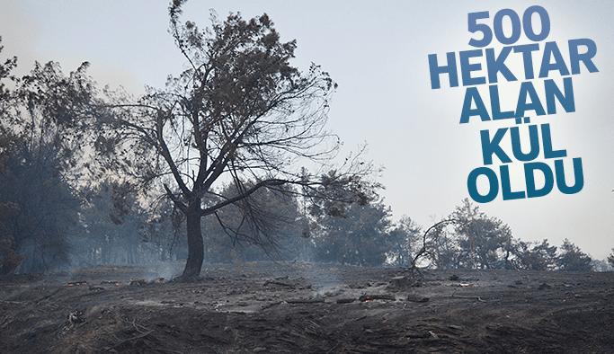 Orman yangınında 500 hektar alan kül oldu