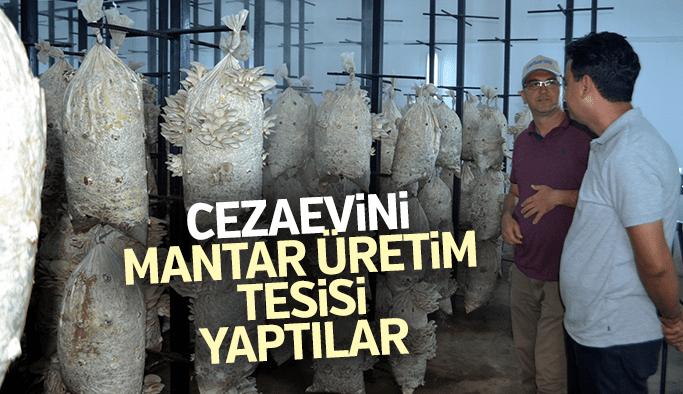 Cezaevini mantar üretim tesisi yaptılar