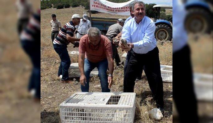 Yüzlerce keklik doğaya salındı
