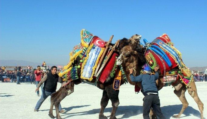 Mersinli deve güreşine hazırlanıyor