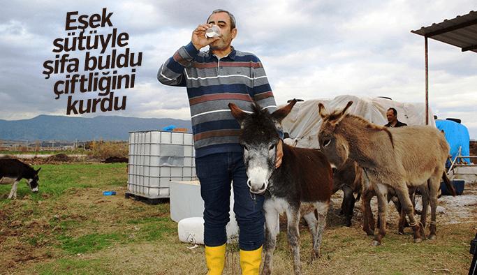 Eşek sütüyle şifa buldu, çiftliğini kurdu