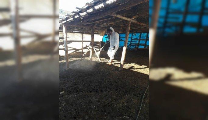 Manisa'da küçük baş hayvan barınaklarına ilaçlama