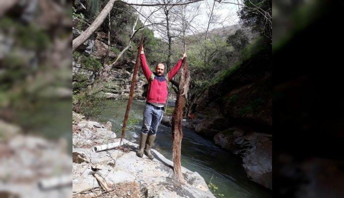 İçme suyu hattından 2 metrelik ağaç kökü çıktı