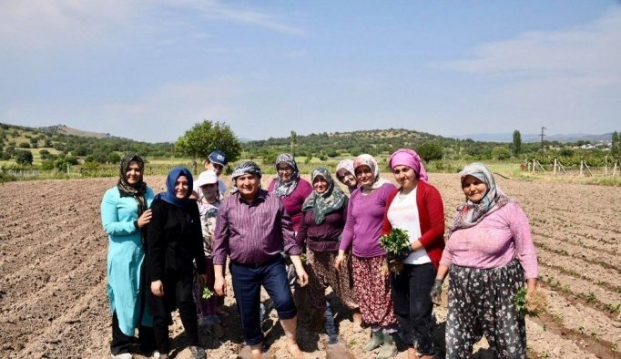 Başkan Çerçi biber ekip, çilek topladı