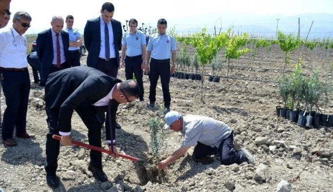 Cezaevi'nde Afrin Şehitleri anısına zeytin fidanı dikildi