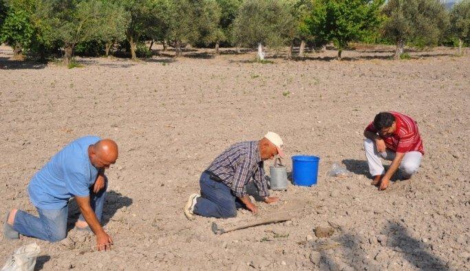 (Özel) Kavun tohumu toprakla buluştu
