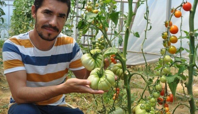 Yetiştirdikleri tarımsal ürünler okullarına gelir olarak dönüyor