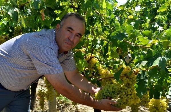 Manisa'nın kuru üzümü Çin'e ihraç edilecek