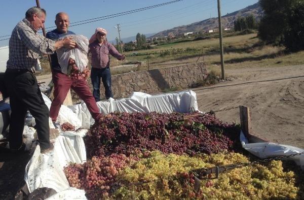 Alaşehir'de sumalık üzüm fiyatları üreticinin yüzünü güldürdü