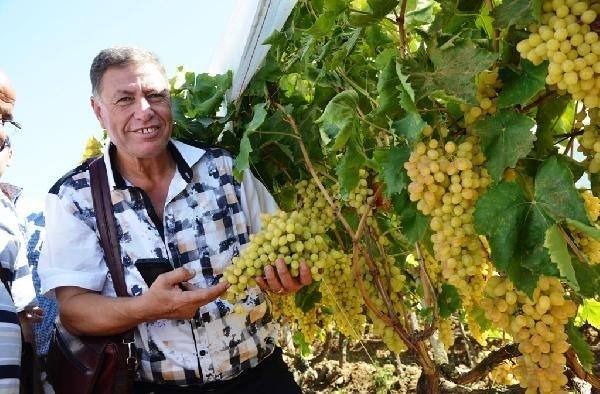 Mısırlı heyet Alaşehir ve Sarıgöl'de üzüm bağlarını ve işletmelerini gezdi