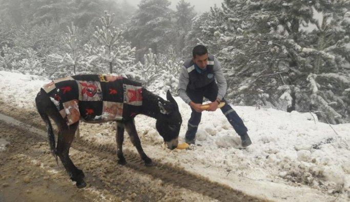 Demirci'de yabani hayvanlara yiyecek bırakıldı