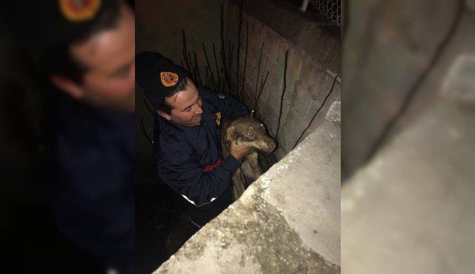 İçi su dolu çukura düşen köpeği itfaiye kurtardı