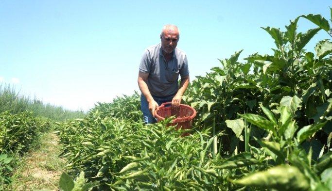Emekli oldu self servis bahçe işine girdi