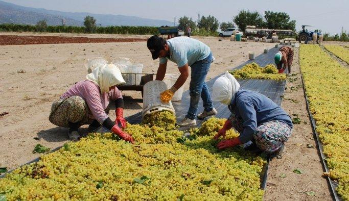 Üzüm işçilerinin beklediği fiyatlar açıklandı