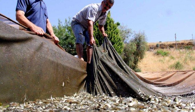 Denizi olmayanManisa'da, balıkçılık atağı