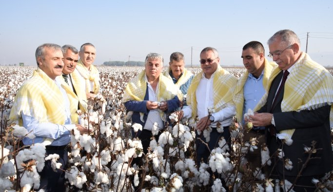 Manisa'da 'Beyaz altın' hasadı başladı