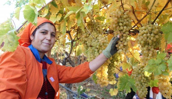 Alaşehir'den 550 milyon dolarlık ihracat