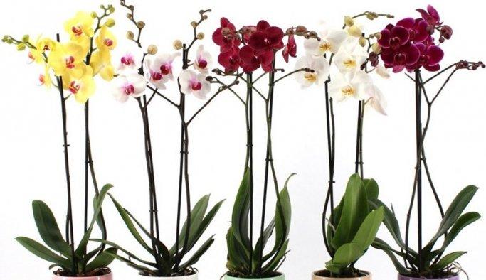 Çiçeklerin Faydaları