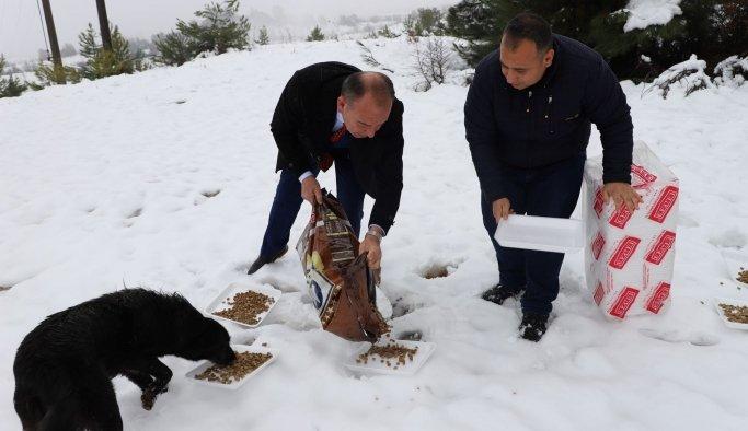 Karda kalan sokak hayvanlarını beslediler