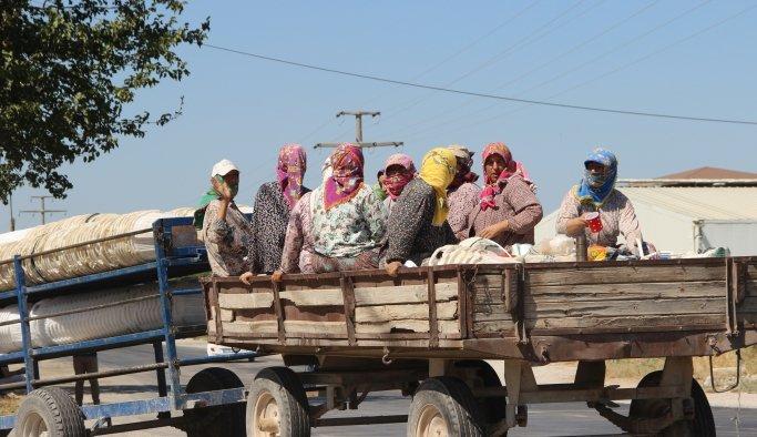 Kazalar ders olmuyor, traktörle tehlikeli yolculuk sürüyor