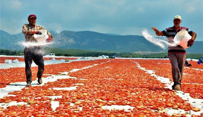 Korona sebebiyle ekim yapamayan ülkelere kurutulmuş domateslerManisa'dan