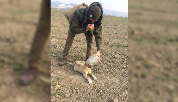 Kafasına plastik şişe sıkışan köpeği DKMP ekipleri kurtardı