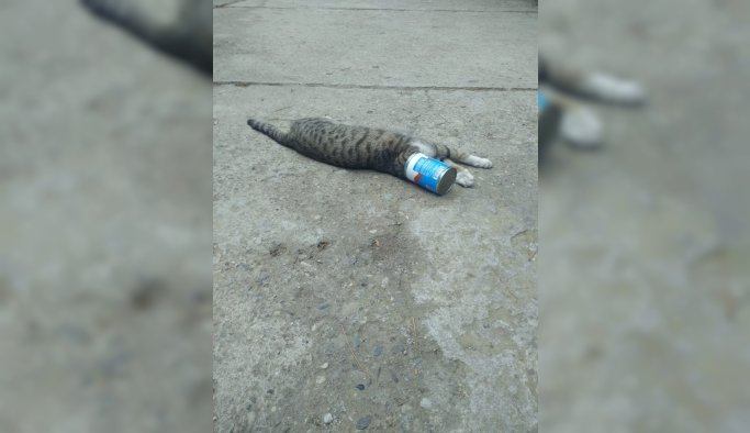 Kafası konserve kutusuna sıkışan kediyi itfaiye kurtardı