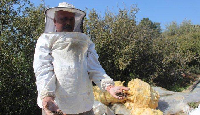 Manisa'da zehirlenen binlerce arı telef oldu