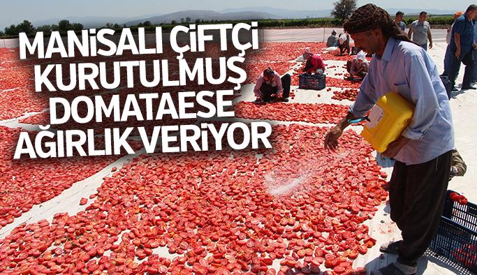 Kurutmalık domatesler ihracata hazırlanıyor