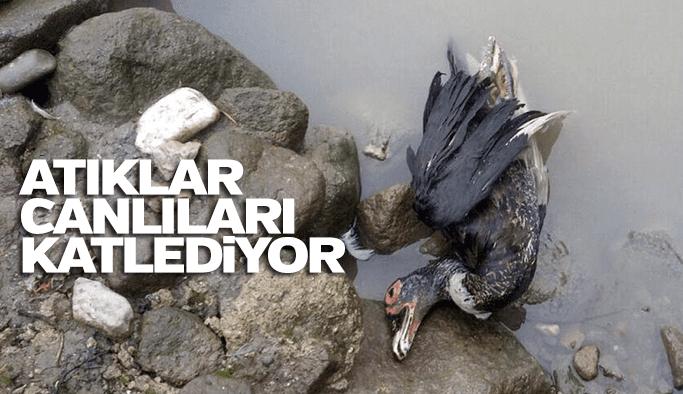 Dere kirletilmeye devam ediliyor, hayvanlar ölüyor