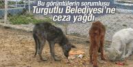 Hayvan bakım ve tedavi merkezine ilgisiz belediyeye para cezası