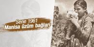 SENE 1961 MANİSA ÇEKİRDEKSİZ ÜZÜMÜ