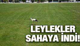 LEYLEKLER SAHAYA İNDİ