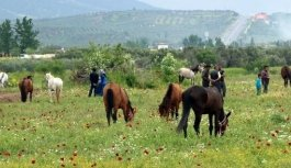 Akhisar'da at tutkunlarını buluşturan panayır