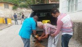 Köpeğe şiddete 625 lira para cezası ve 'hayvan sahiplenme' yasağı
