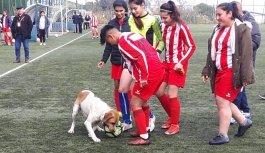 Kadınlar futbol maçında davetsiz misafir