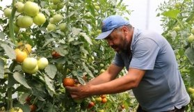Manisa Büyükşehir'in projesi üreticiye kazandırdı