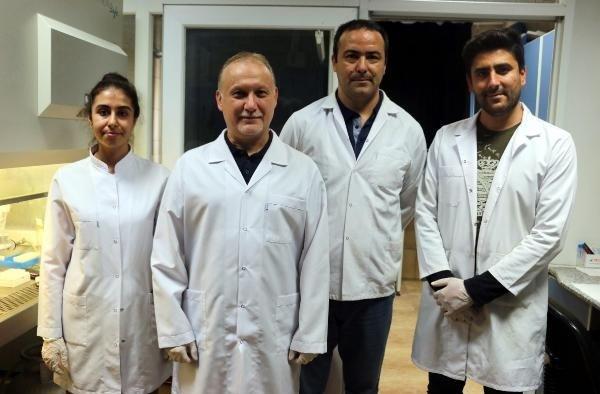Türkiye'de yetişen 4 bitki türü 'sıtma' hastalığına deva olacak