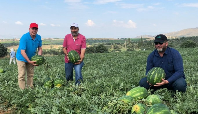 Manisa'nın ünlü Poyraz Karpuzu'nda hasat sevinci