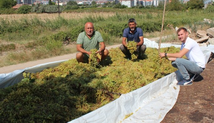 Manisa'da düşük kalite üzümde alımlar başladı